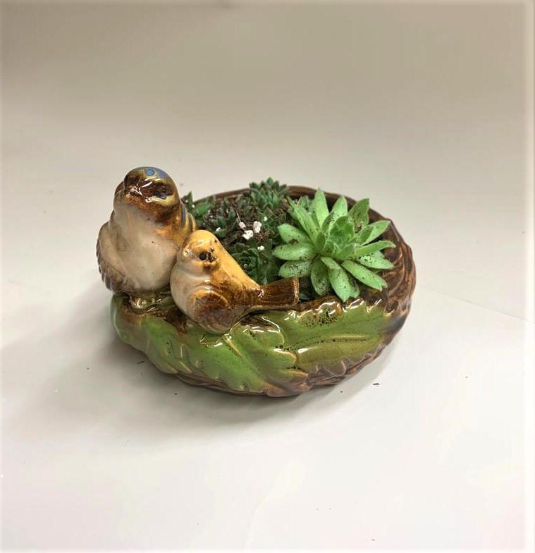 קן לציפור עם סוקולנט